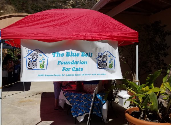 Laguna Beach Pet Parade and Chili Cook-Off Blue Bell Foundation LagunaBeachCommunity.com
