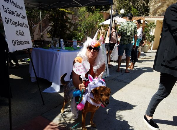 Laguna Beach Pet Parade and Chili Cook-Off LagunaBeachCommunity.com