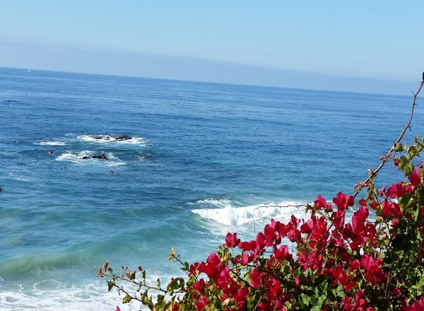 Flower over the Pacific Ocean at Cress Street Beach in Laguna Beach