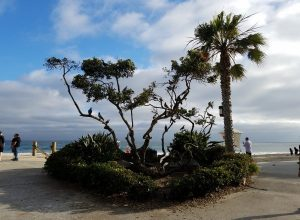 Arbor Day Celebration Laguna Beach
